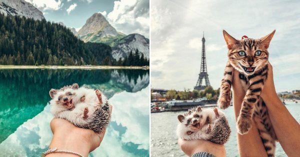 Hedgehog Cat Travel
